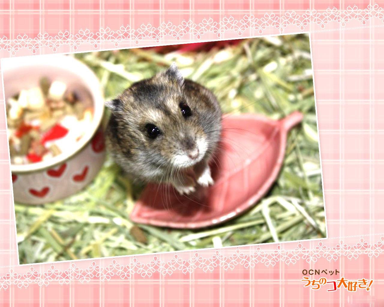 图片标题:动物世界-艺术宠物(1280x1024)