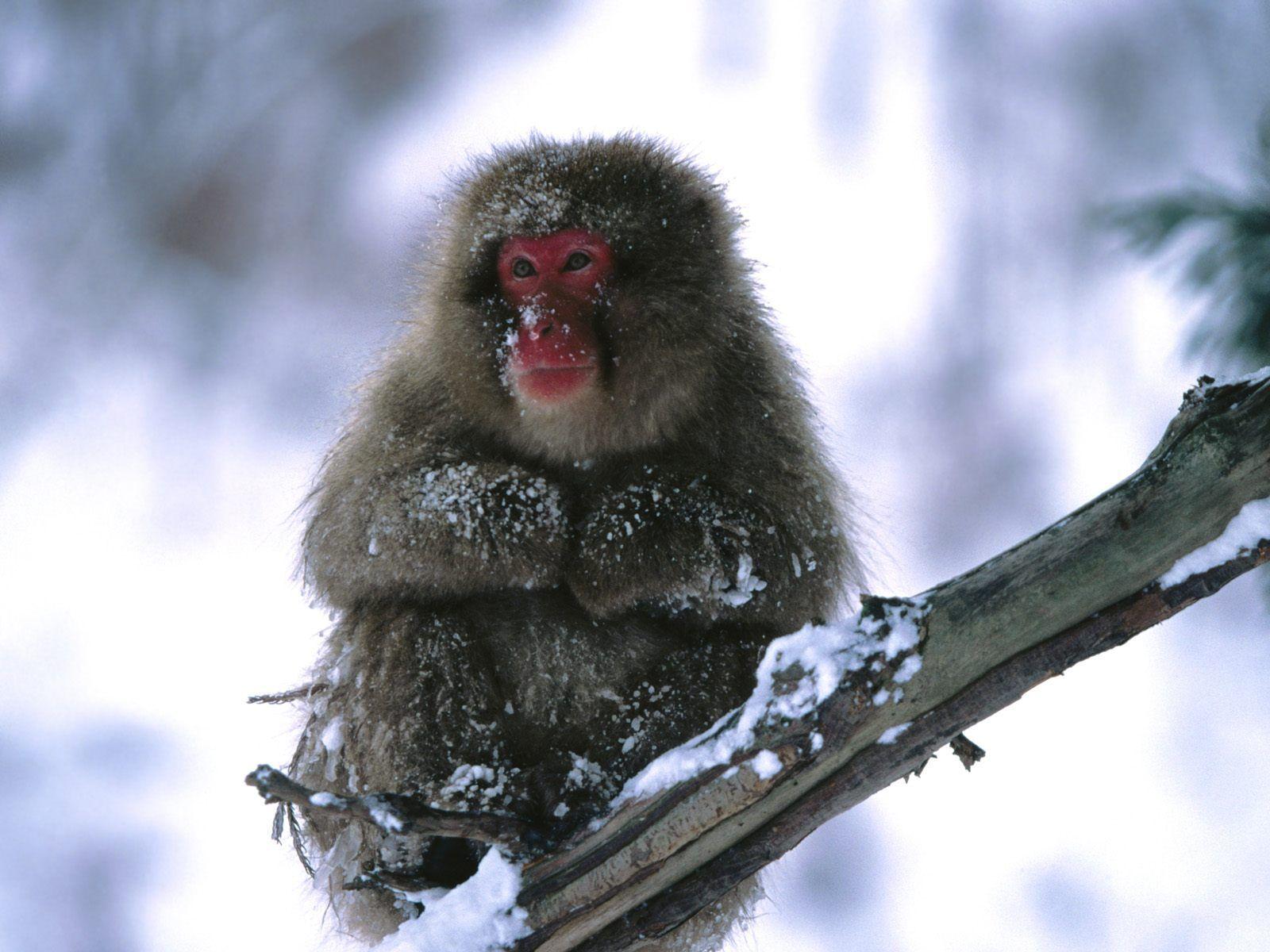 动物世界,自然传奇,可爱动物