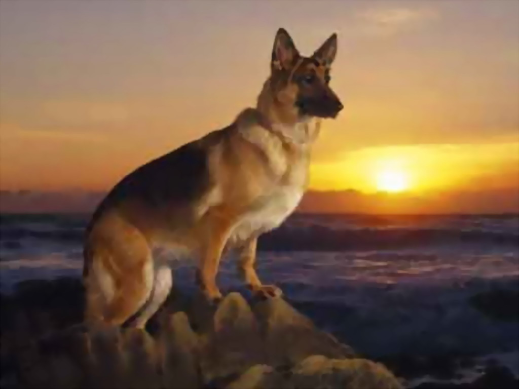 为大家推荐看家护院各种类型的狗狗