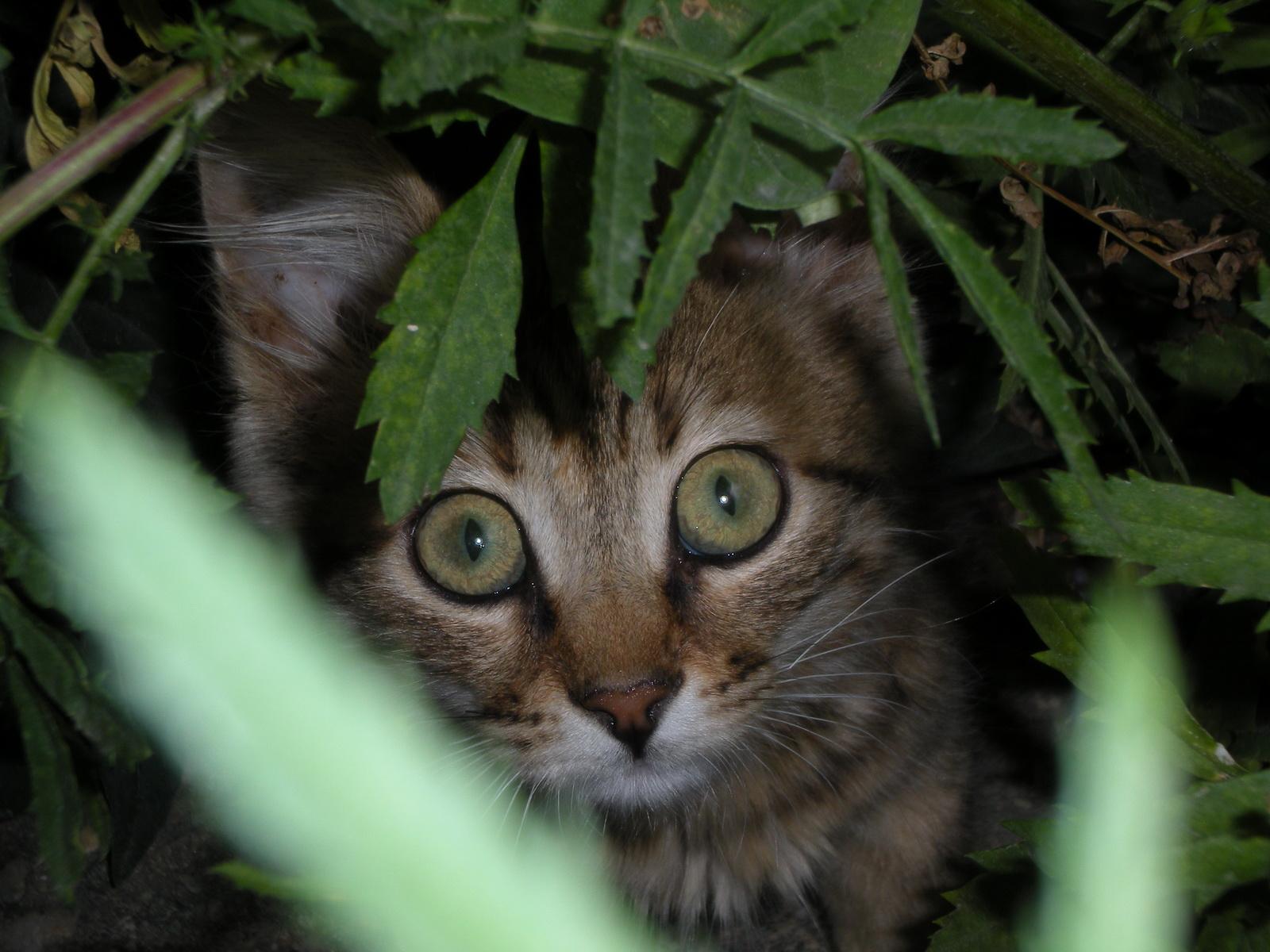 图片标题:动物世界-猫咪特写(1600x1200)