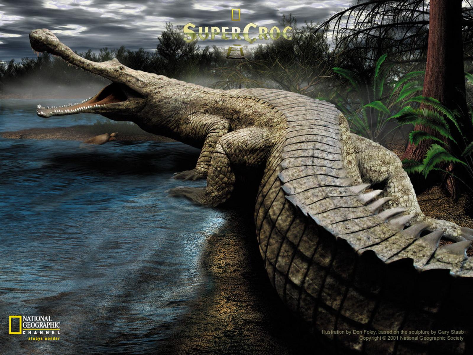 图片标题:动物世界-水生兽类(1600x1200)