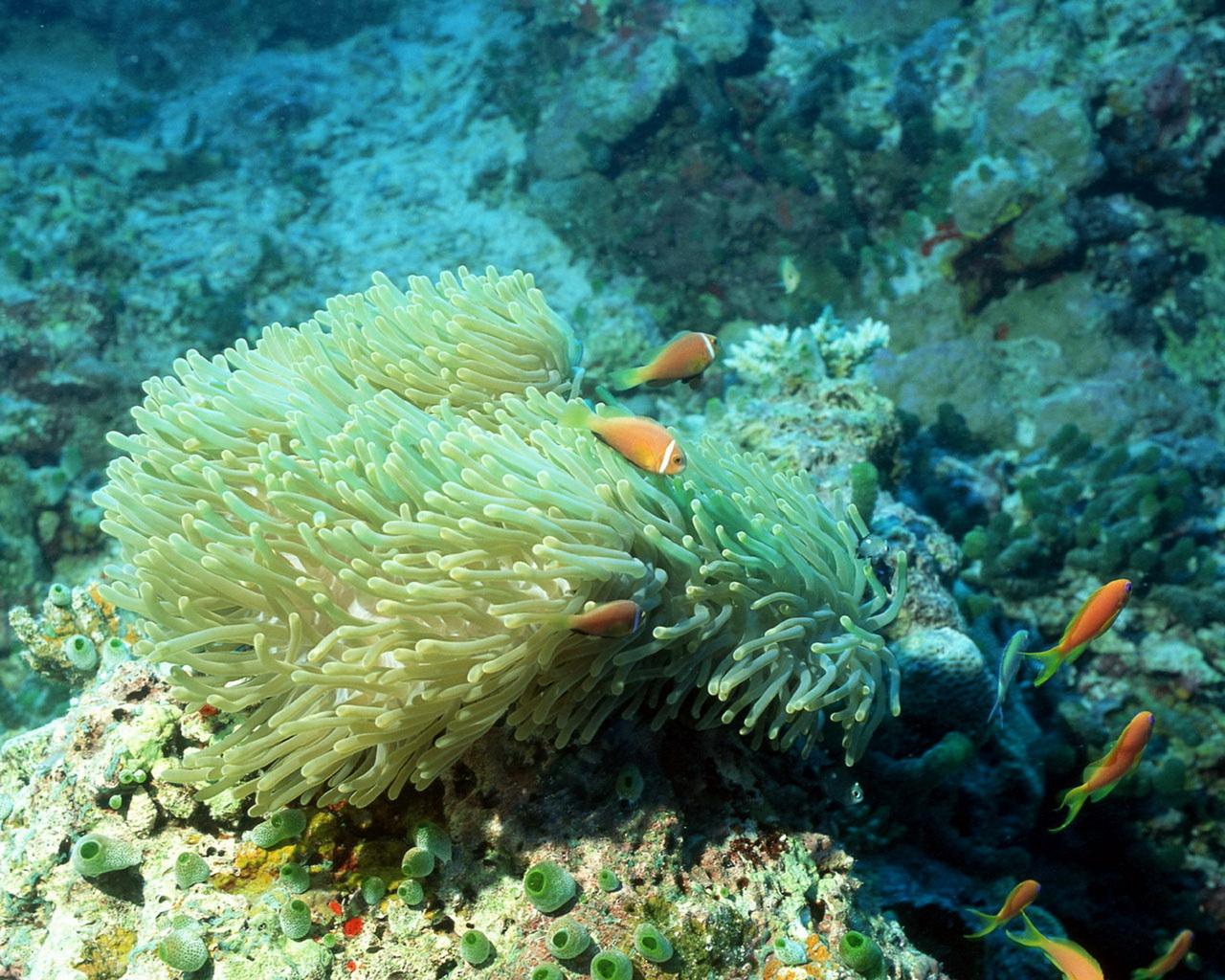 壁纸 海底 海底世界 海洋馆 水族馆 1280_1024