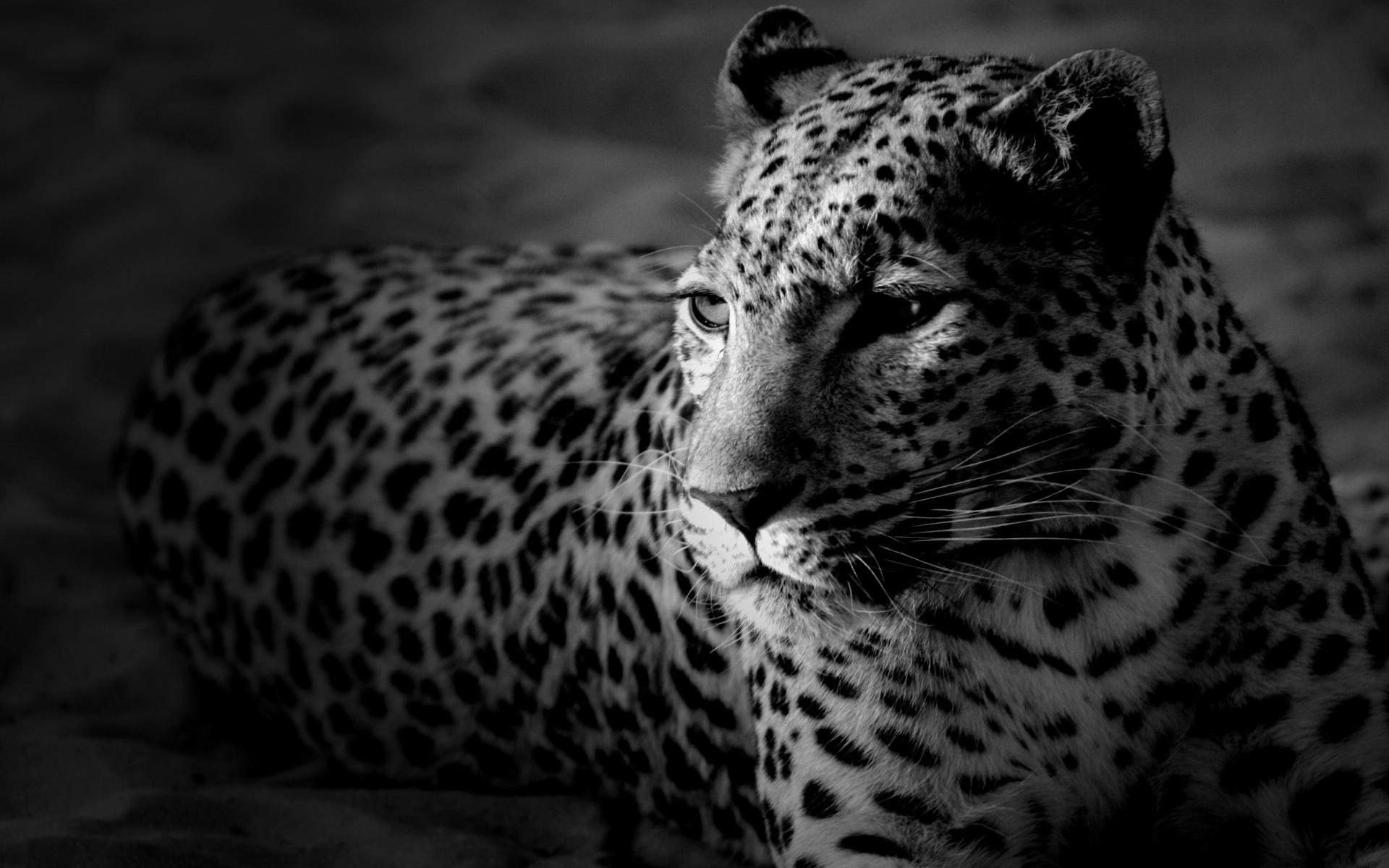 图片标题:动物世界-狮虎豹03(1920x1200)