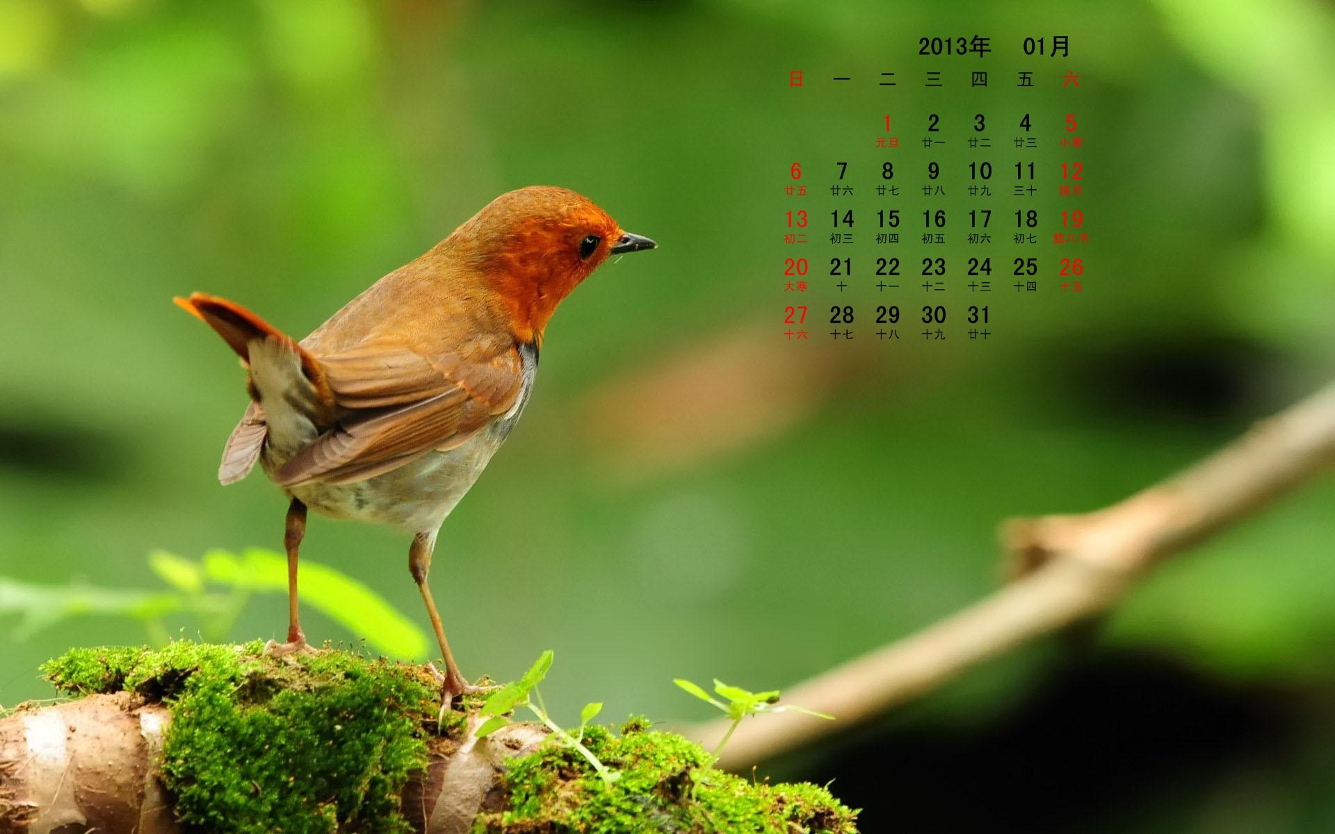 图片标题:2013年元月动植物月历(1920x1200)