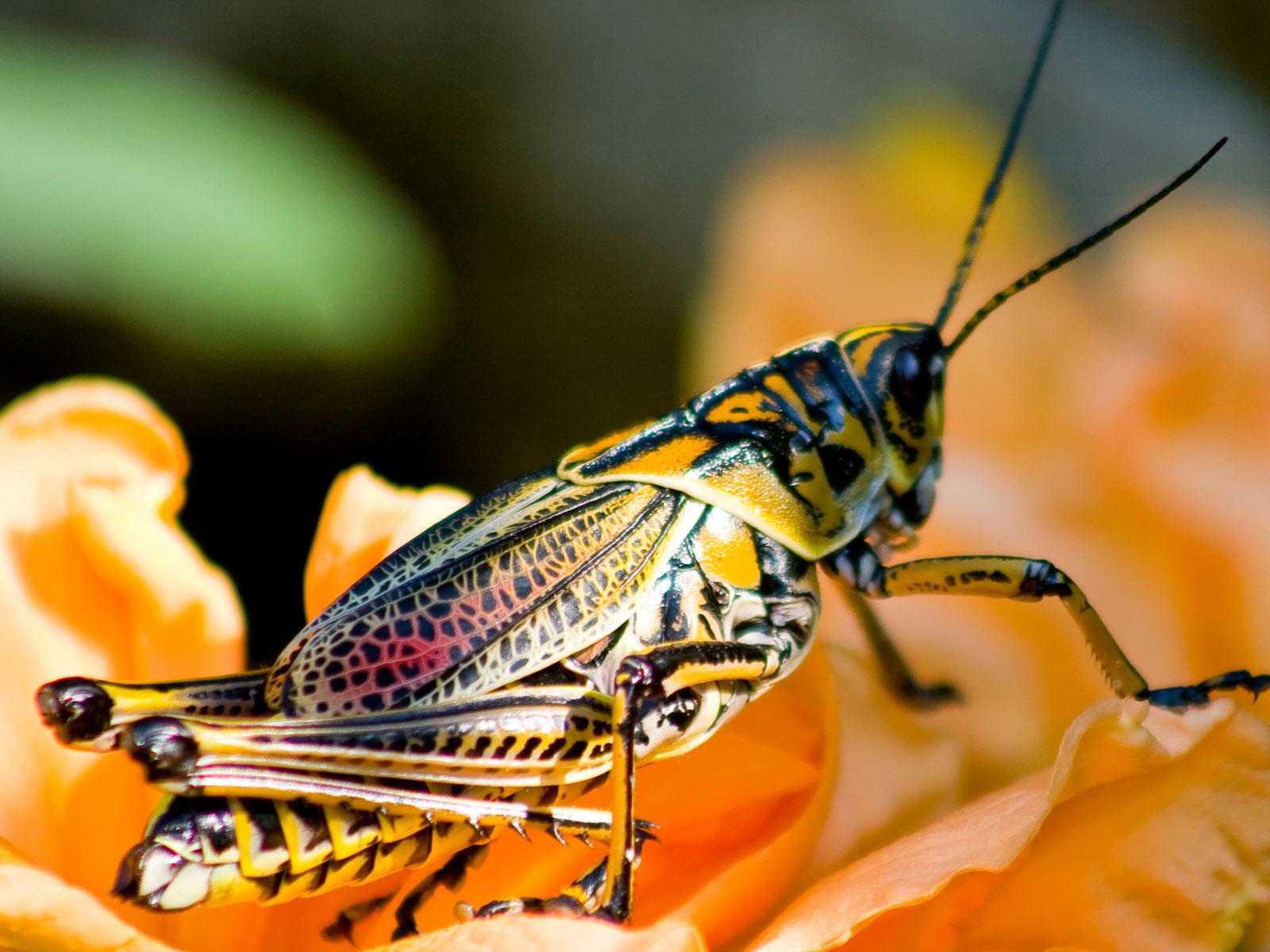 动物世界-昆虫集锦04(1600x1200)壁纸 - 桌面壁纸