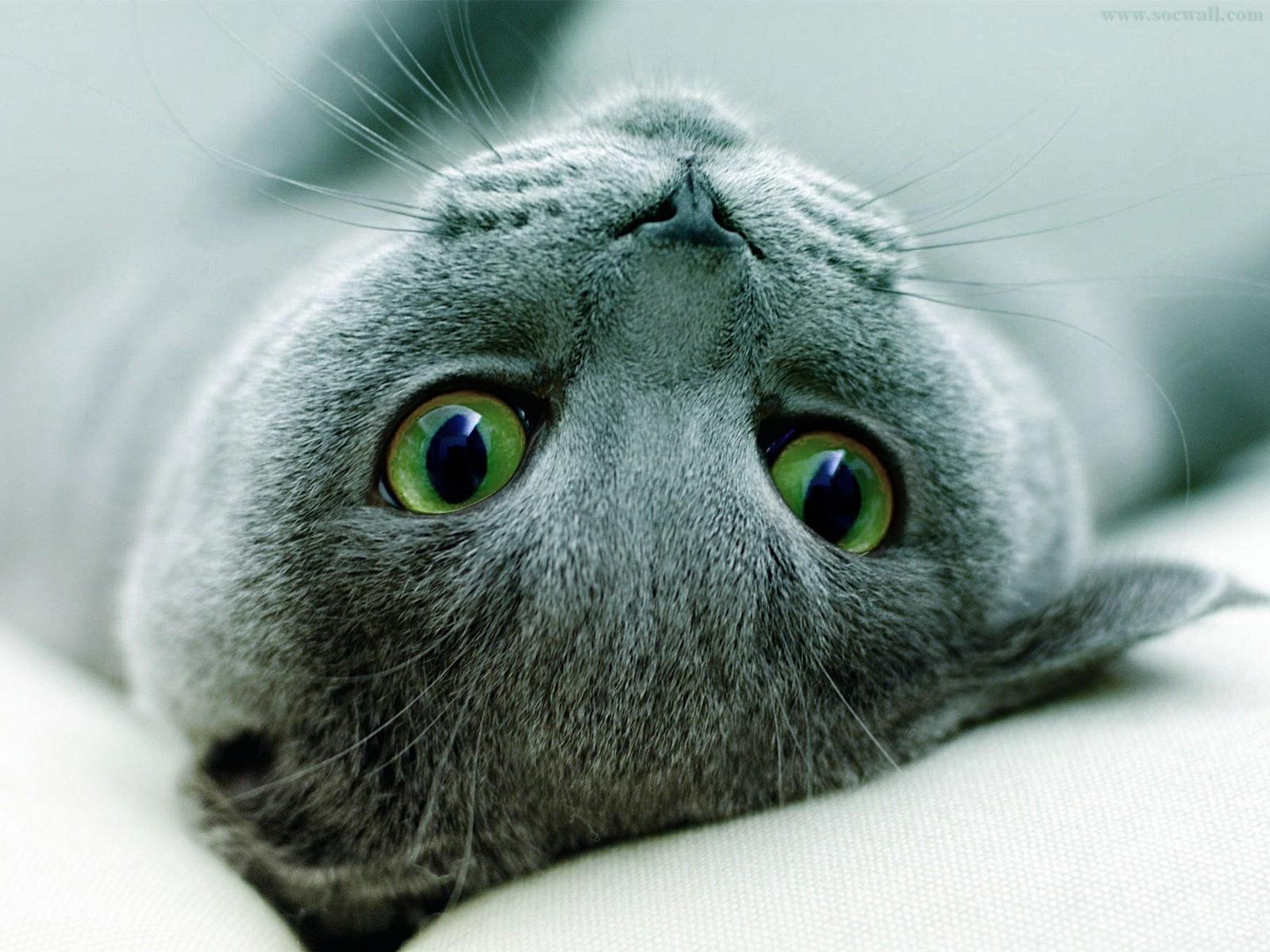 动物世界-猫咪写真01(1600x1200) 壁纸