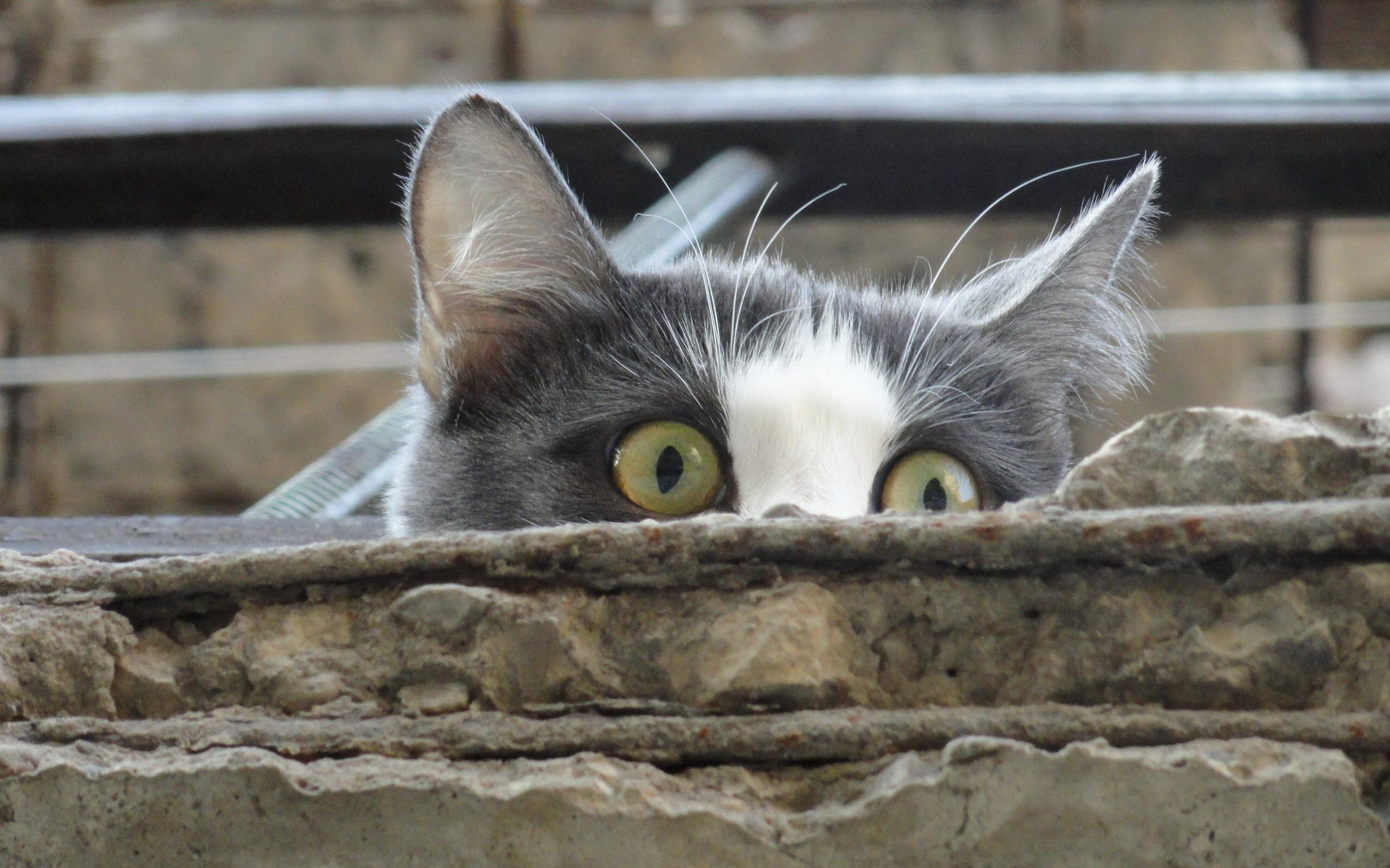 图片标题:动物世界-猫咪写真02(2560x1600)