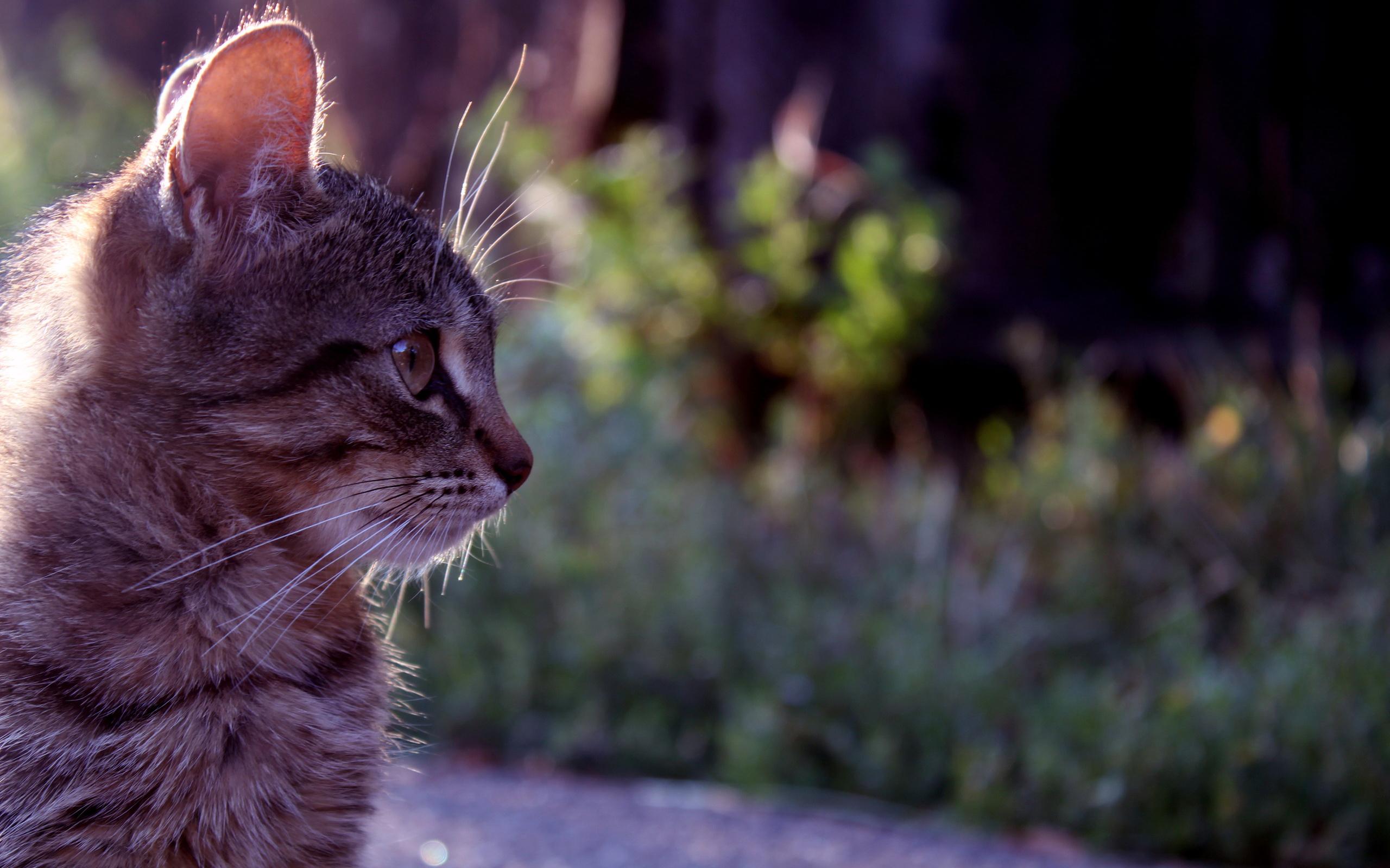 动物世界-猫咪写真03(2560x1600)壁纸