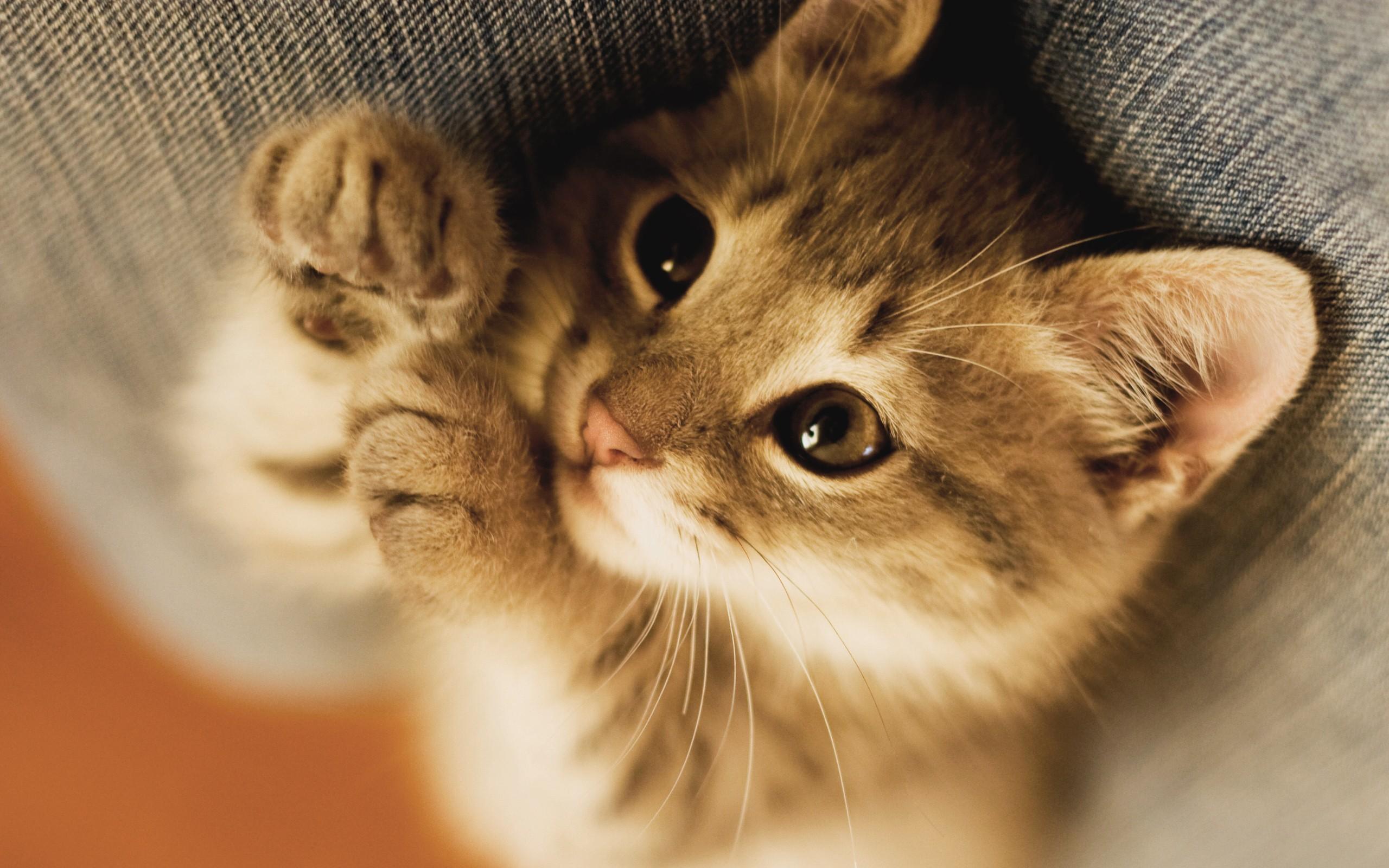 图片标题:动物世界-猫咪写真03(2560x1600)