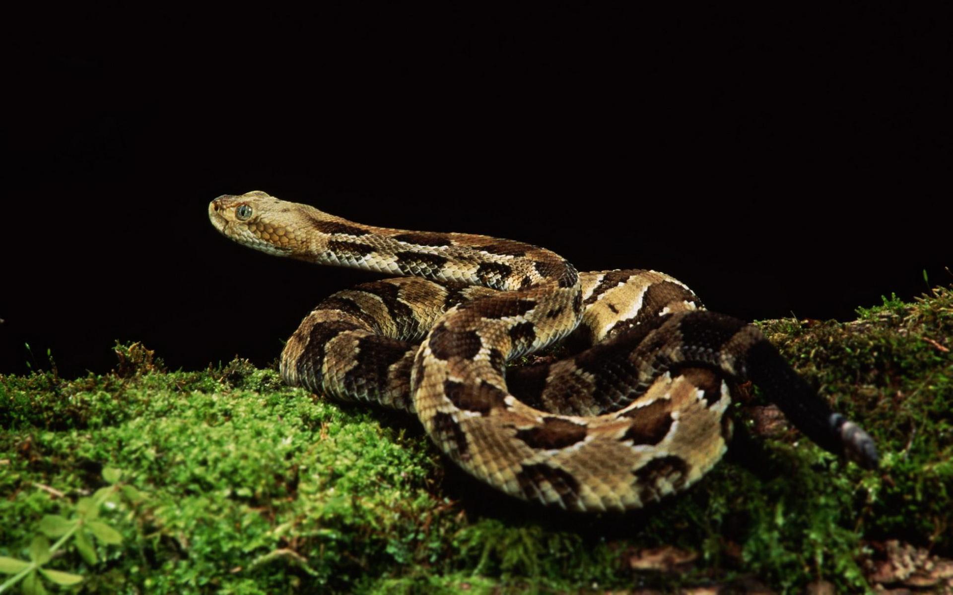 动物世界-蛇年蛇影01(1920x1200)壁纸