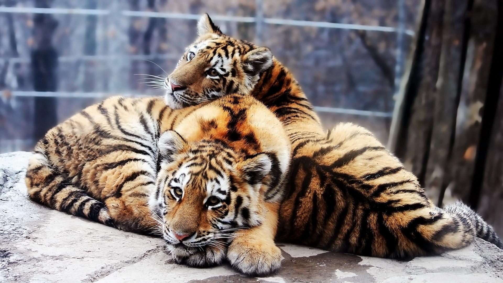 奇妙的动物世界绘画_绘画分享