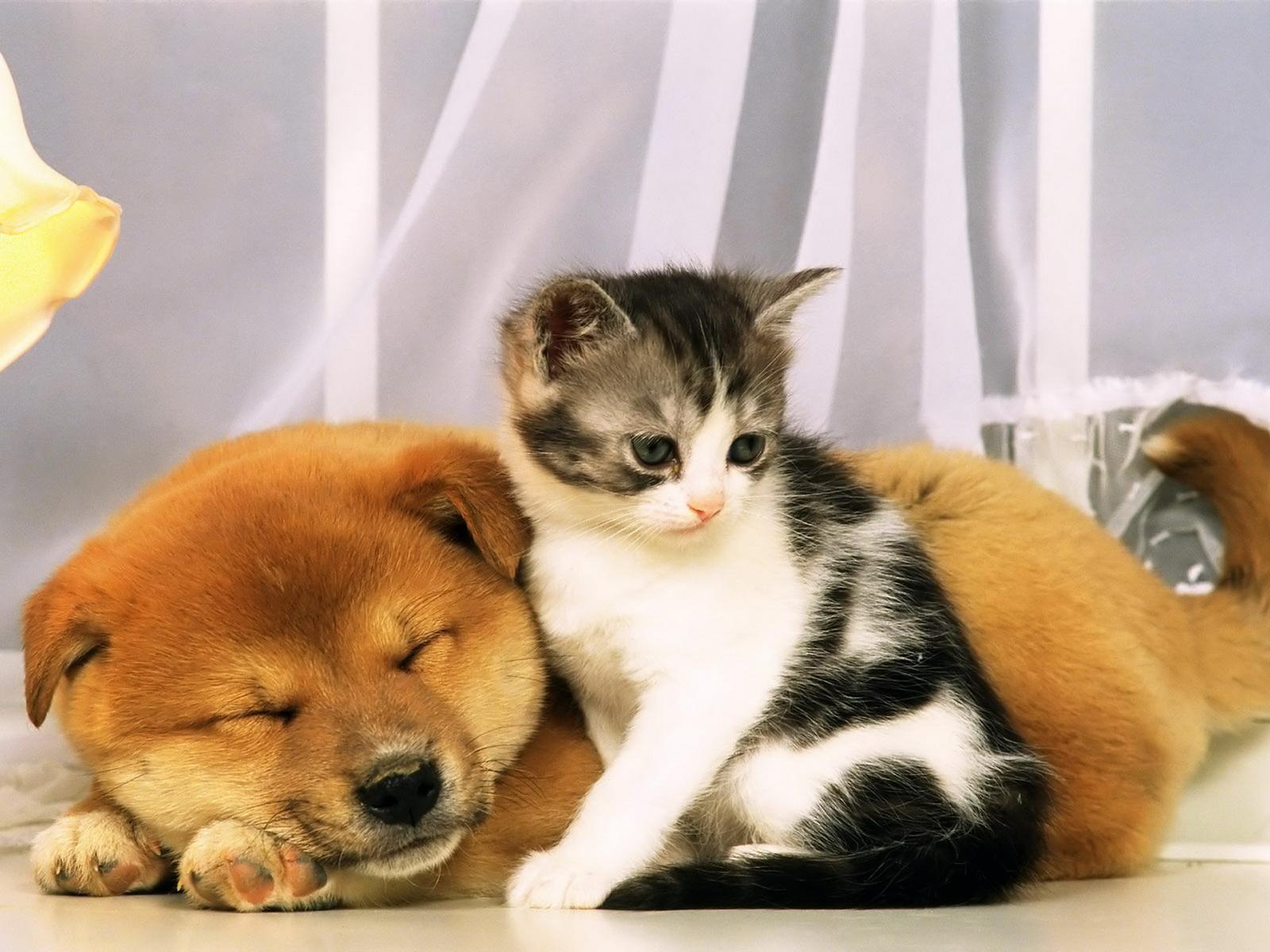 动物世界-猫狗亲亲(1600x1200)壁纸 - 桌面壁纸【壁纸