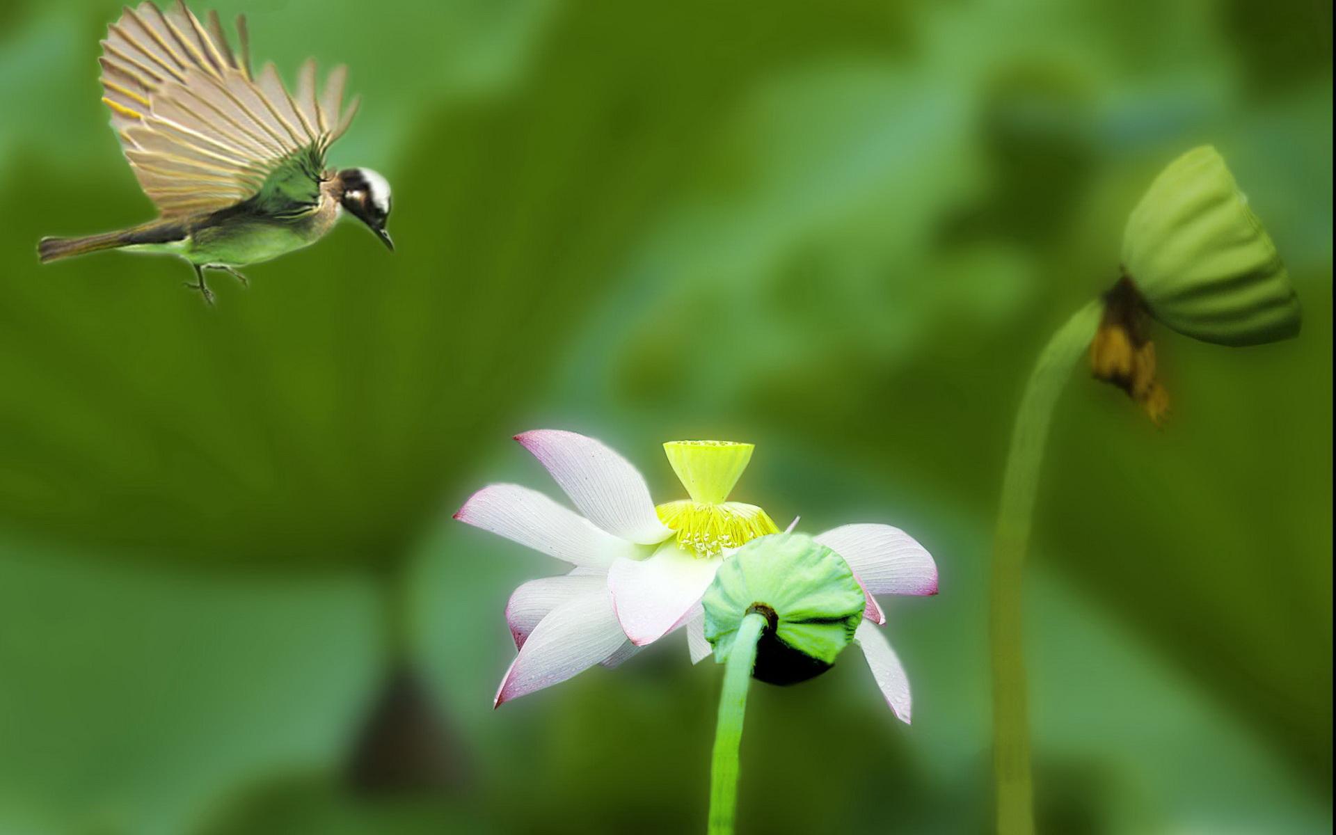 簡報壁紙梅花風景花卉展示