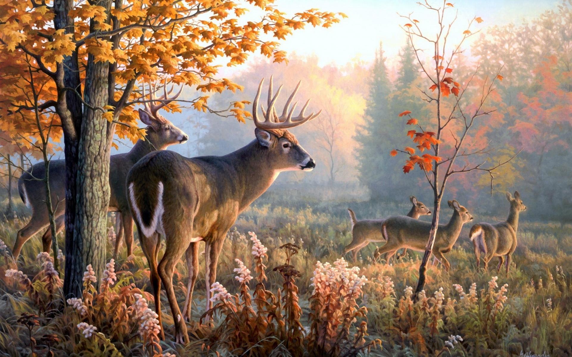 动物世界-鹿类桌面(1920x1200)壁纸