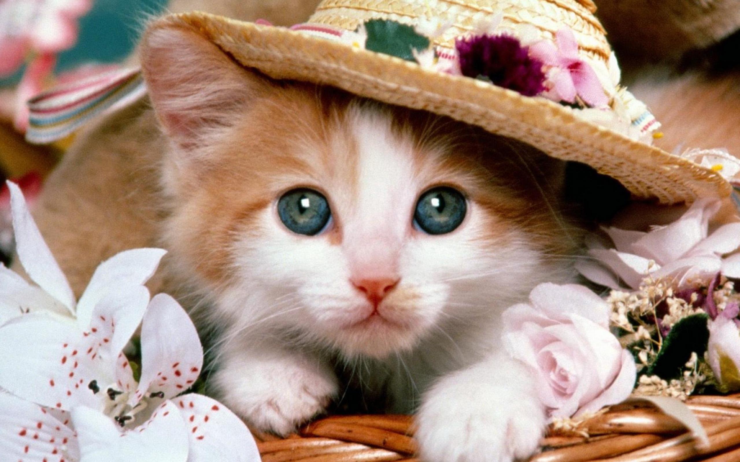 动物众生相01-猫咪(2560x1600)壁纸