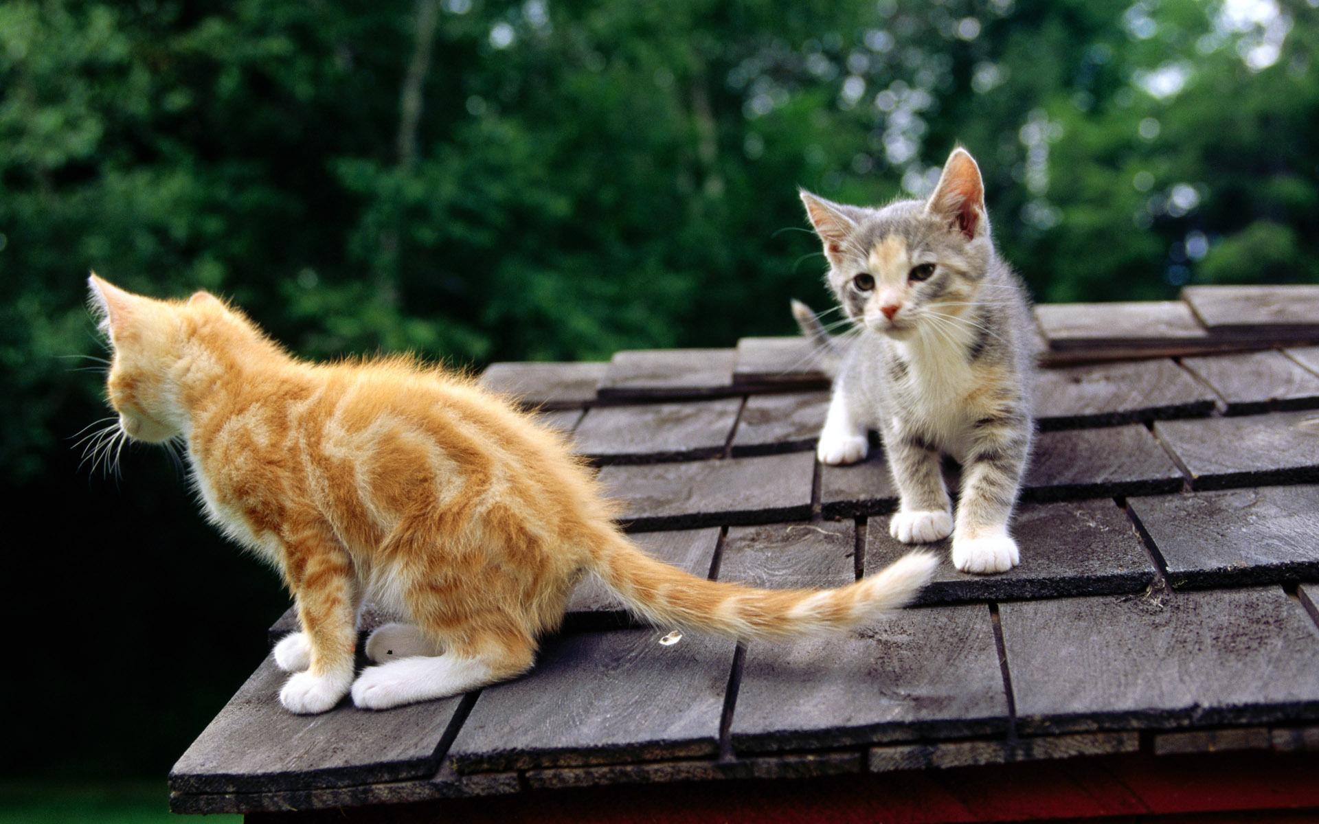 喵星人高清壁纸; 标签:可爱猫咪壁纸; 可爱小猫咪桌面高清壁纸