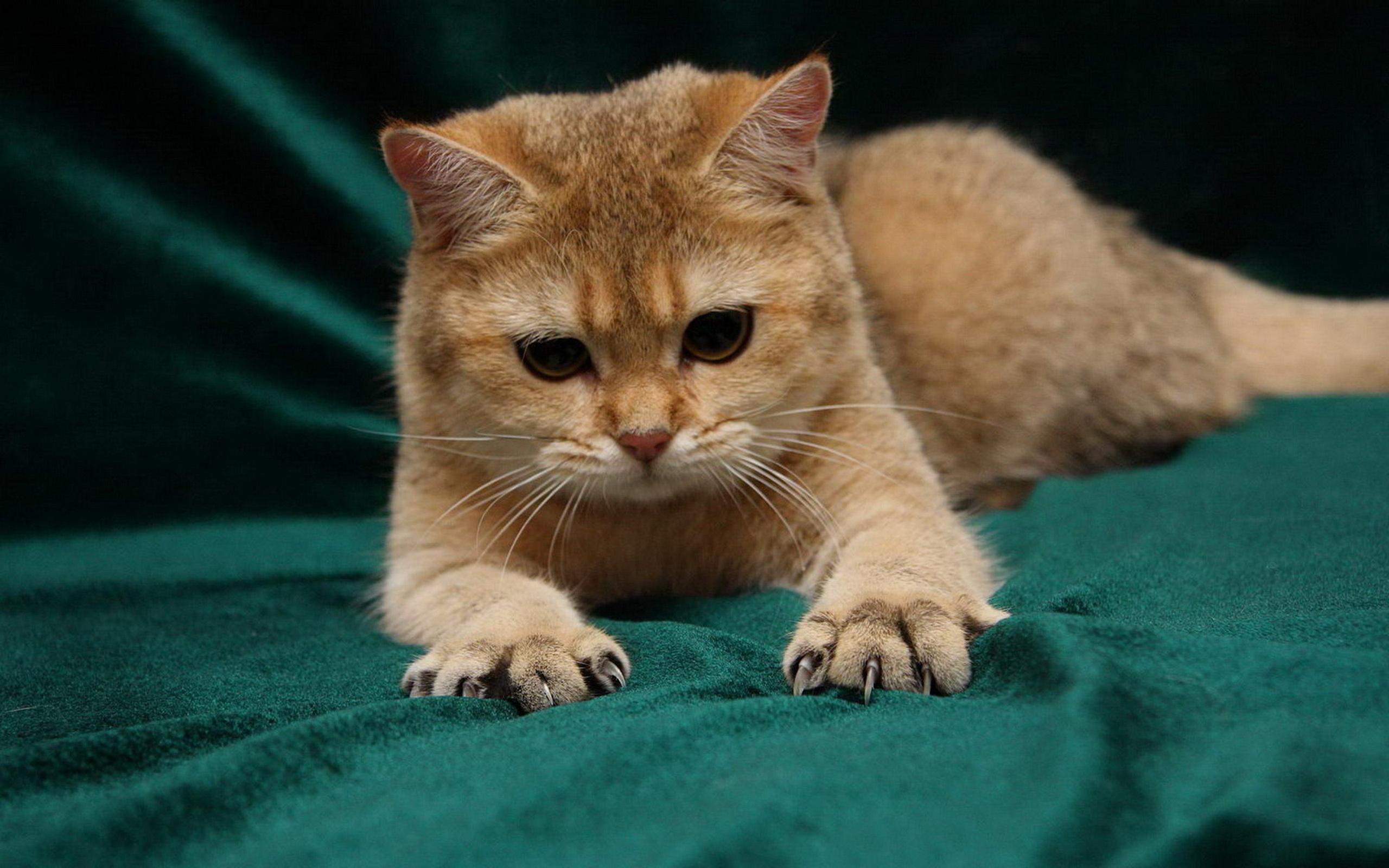 小猫咪通图片大全可爱简单