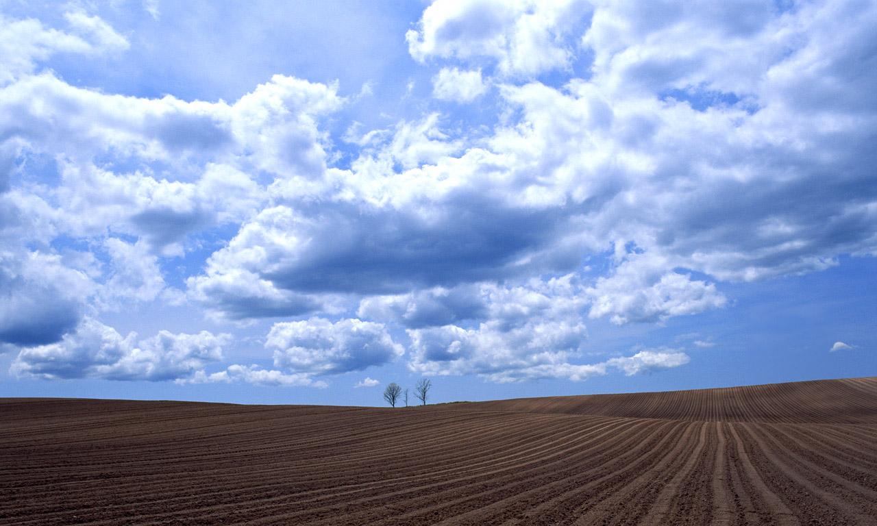 1280x768像素_那些花儿杜鹃手机图片壁纸_1280x768_风景壁