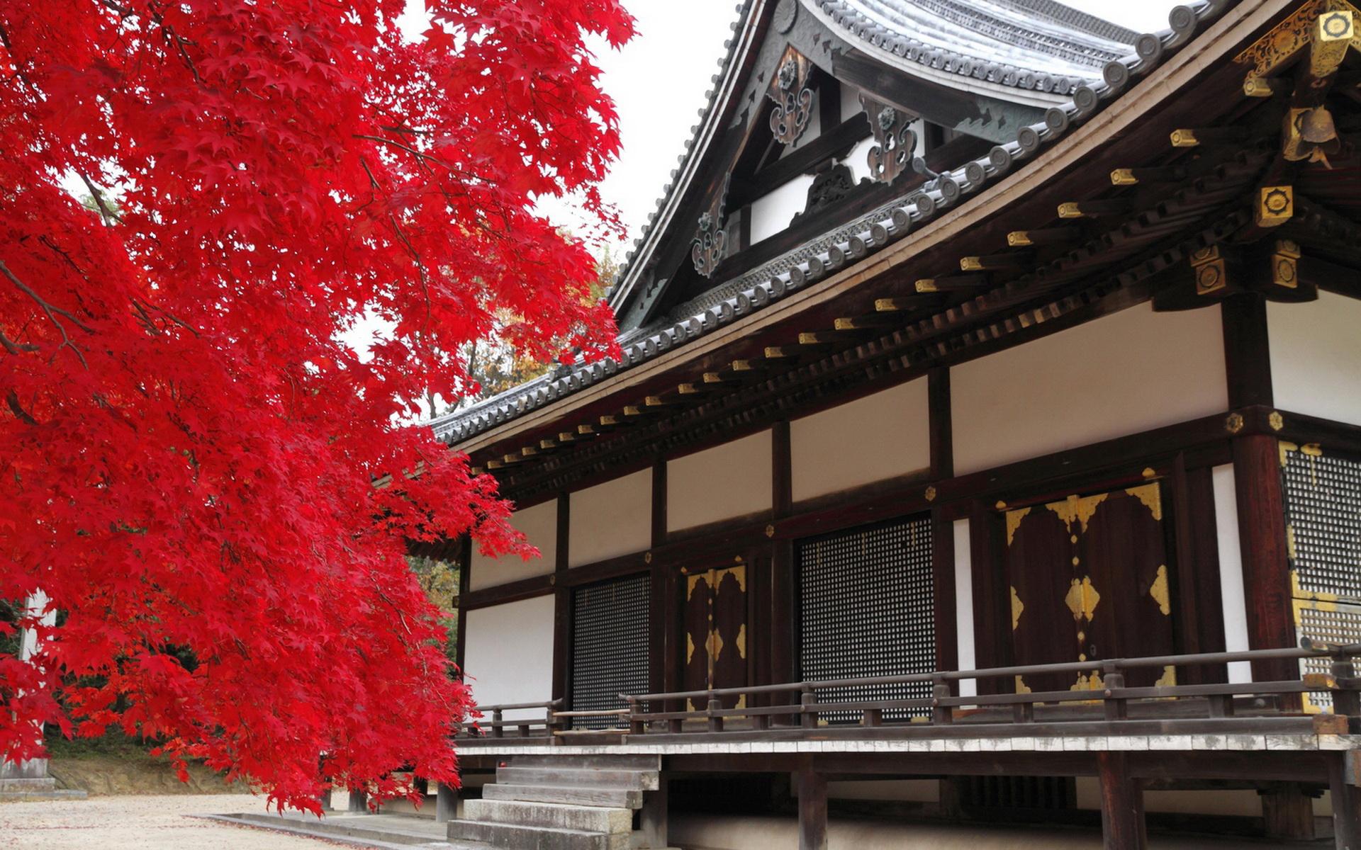 中国 壁纸 红叶/日本红叶...