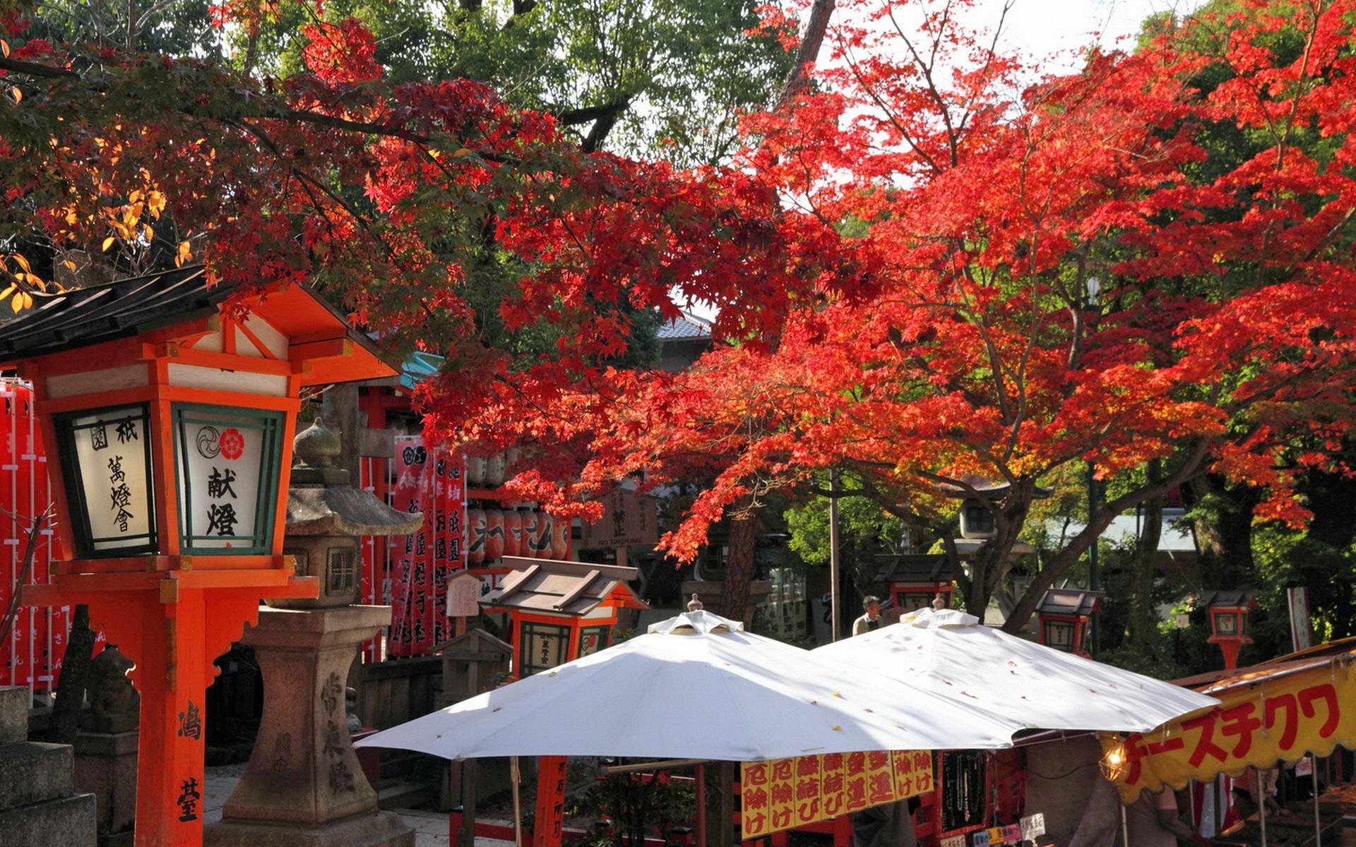 日本 壁纸 红叶/[心情贴图]红叶/庭院观[复制链接]...