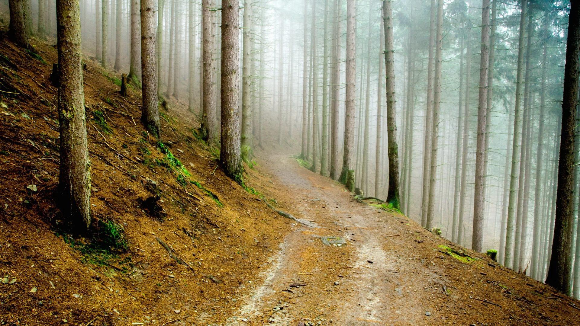 森林树林风景桌面壁纸下载该壁纸; 个人收集高清风景桌面1920 1200