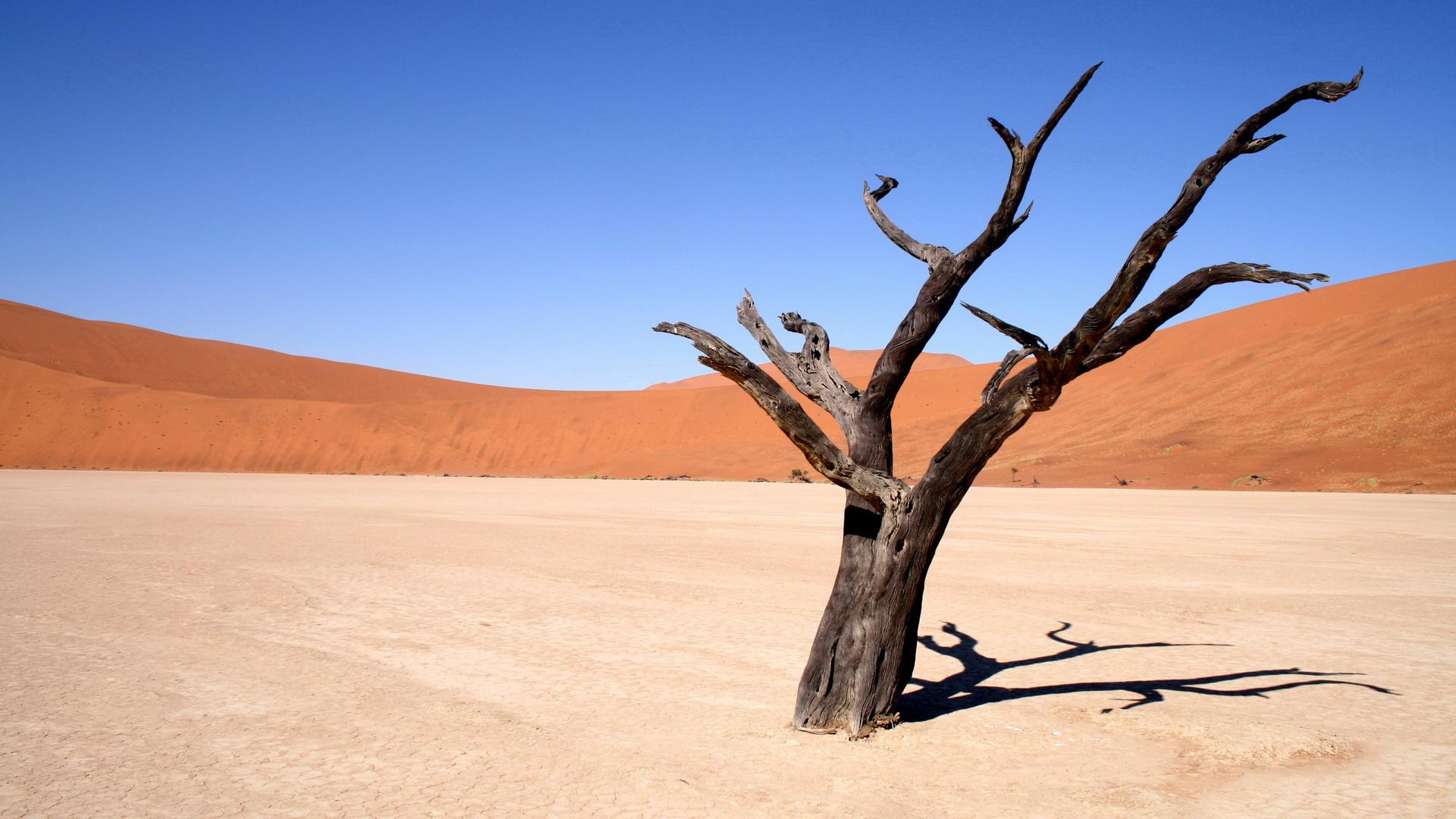 植树节,我们聊聊环保; 沙漠 枯树; 沙漠 枯树摄影图