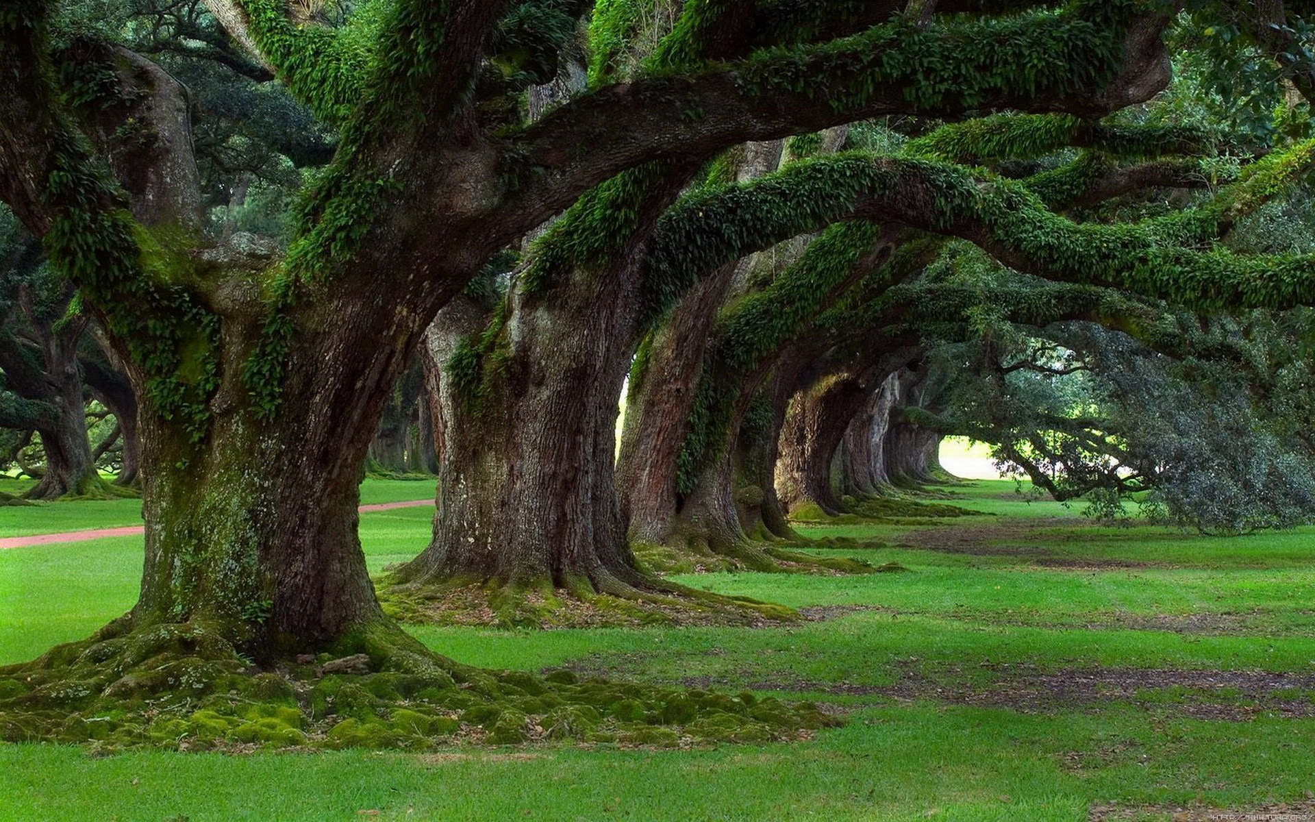 宽屏摄影风景243-树林(1920x1200) 壁纸