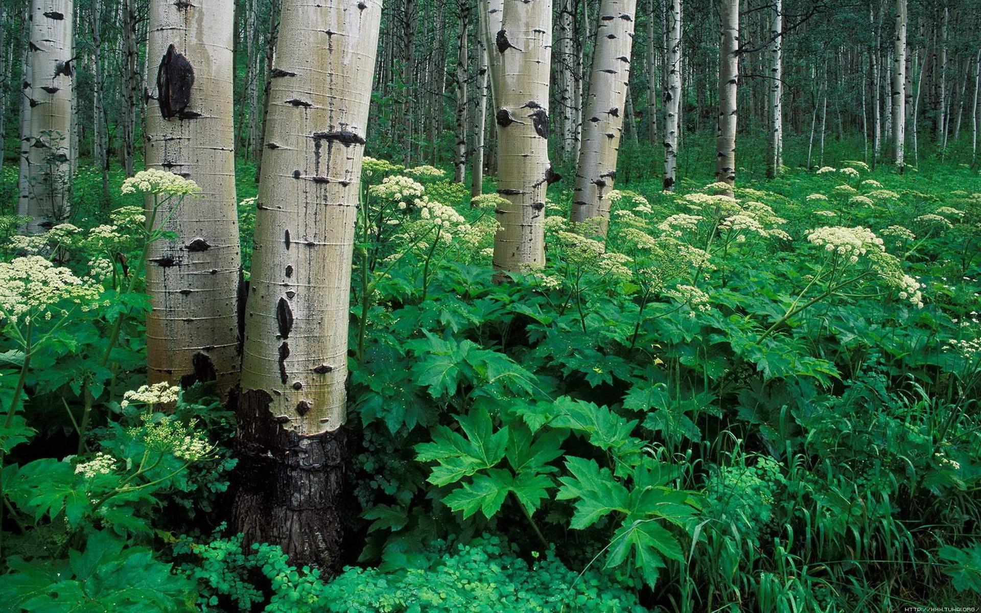 宽屏摄影风景234-树林(1920x1200)壁纸 - 桌面壁纸
