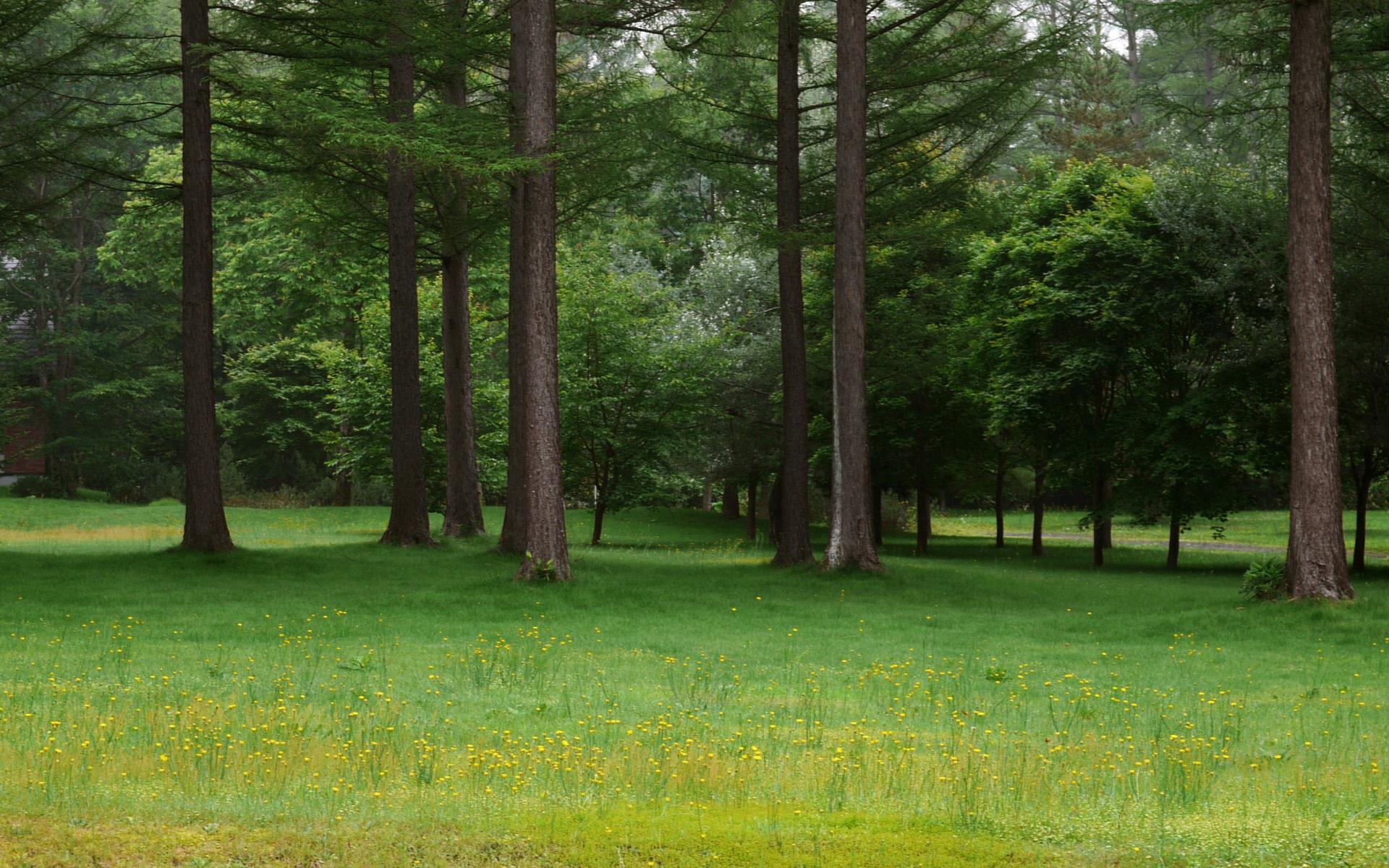 宽屏摄影风景235-树林(1920x1200) 壁纸