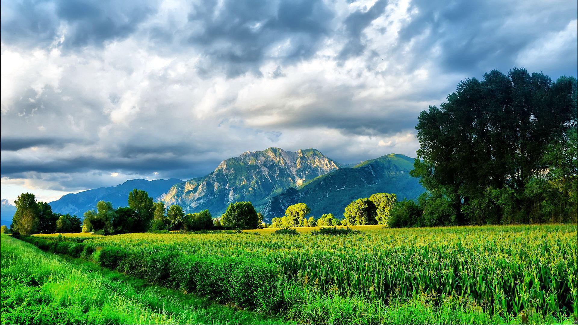 宽屏风景-绿色环保09(1920x1080)壁纸