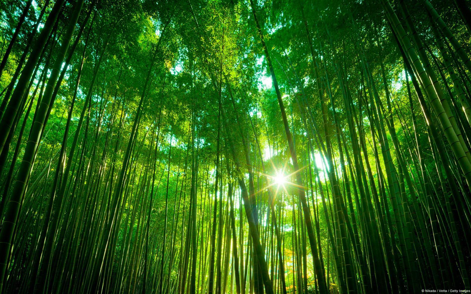摄影风景-绿色竹林景观04(1920x1200)壁纸