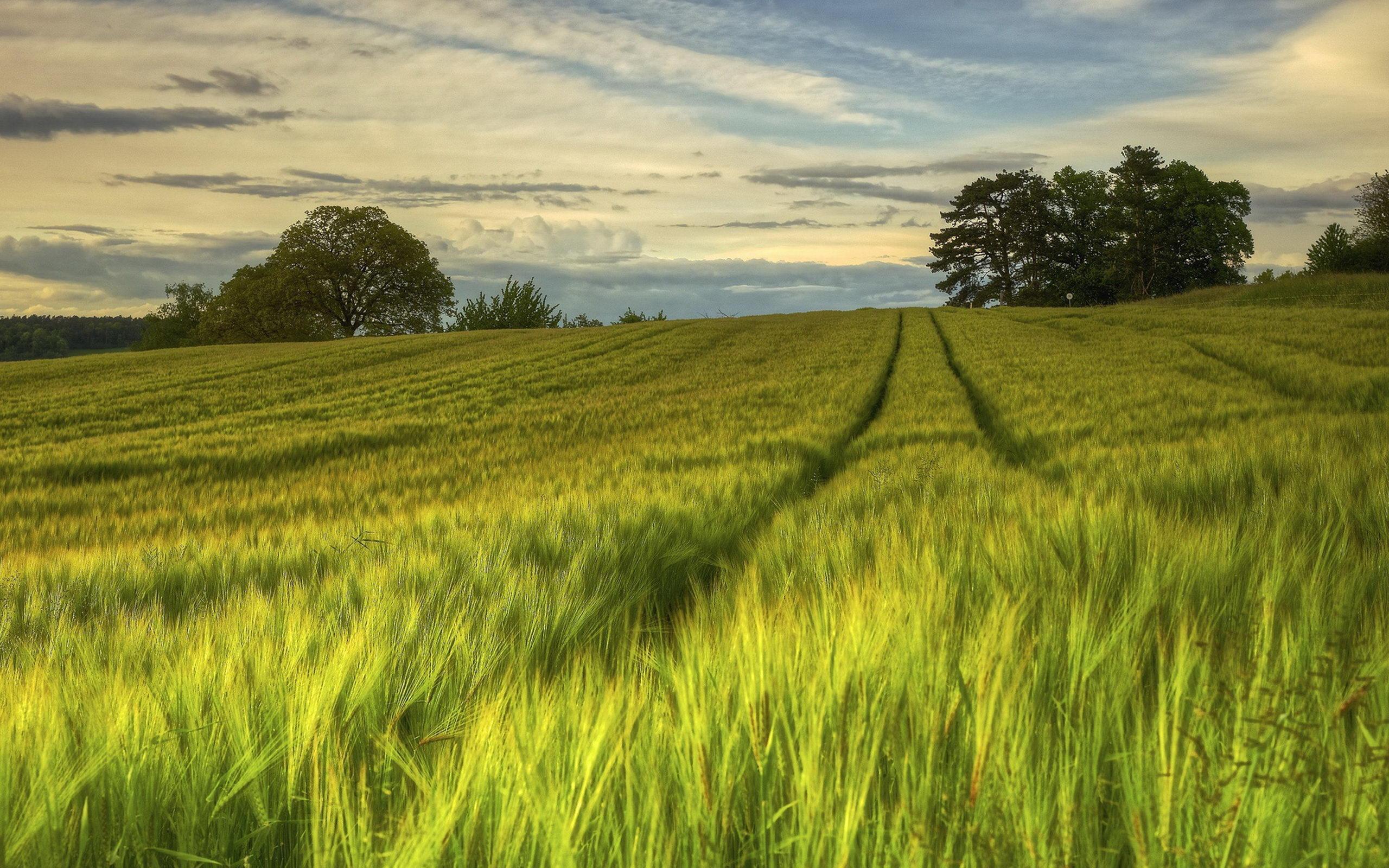 迷人可爱的日落夕阳田野风景   宽屏绿色田野风景桌面