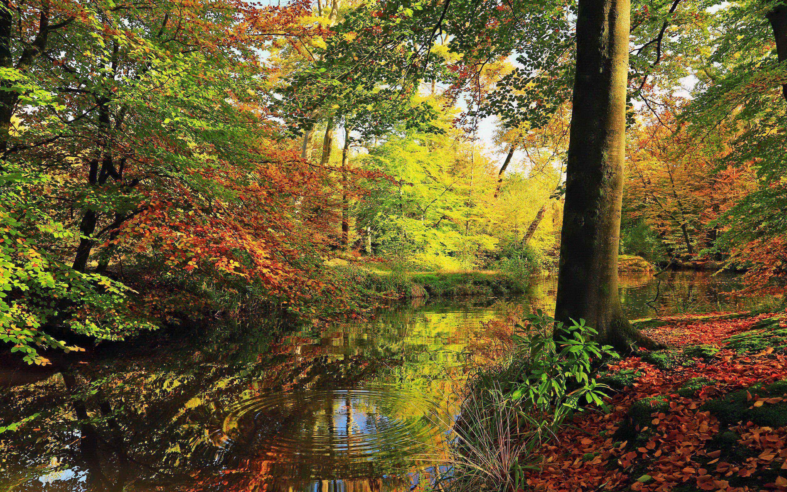 树木树林摄影风景桌面17(2560x1600)壁纸