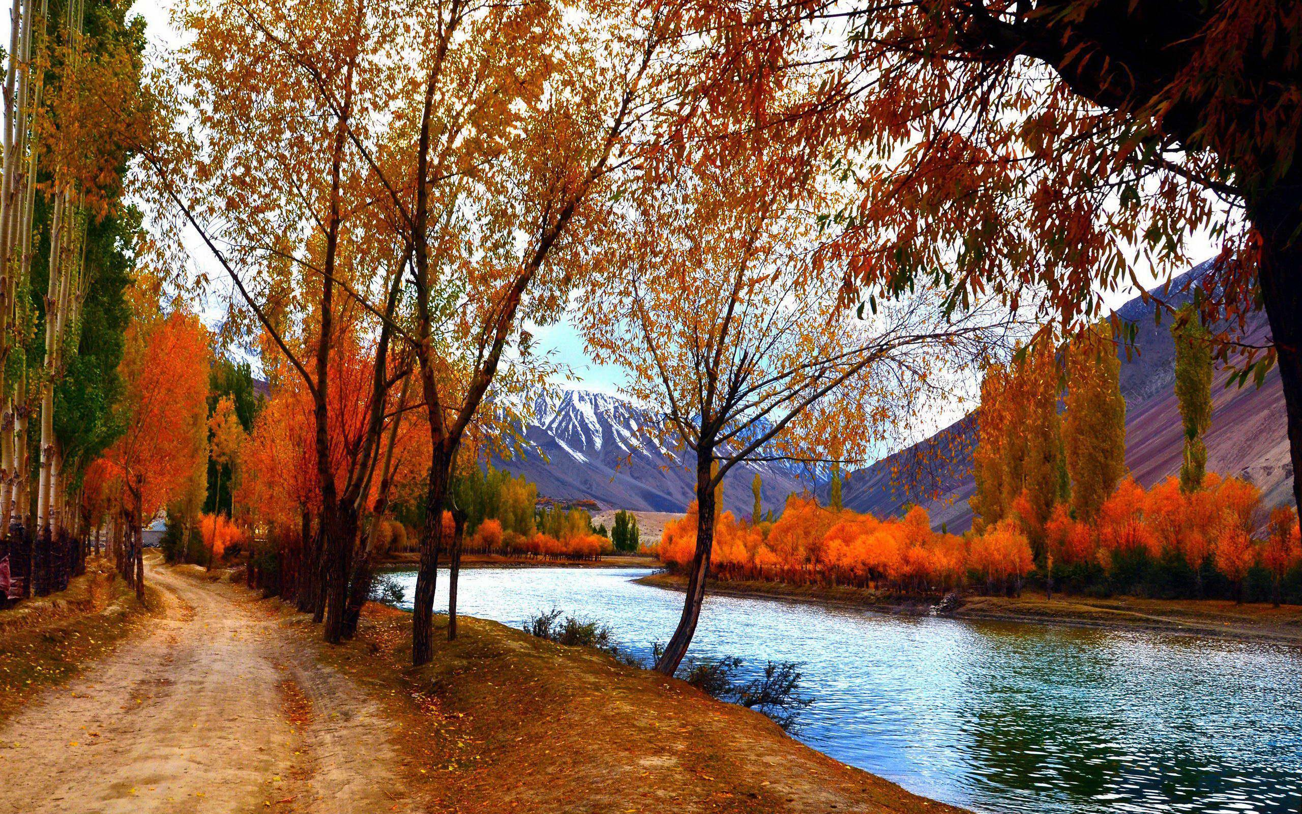 树木树林摄影风景桌面17(2560x1600)壁纸 - 桌面壁纸