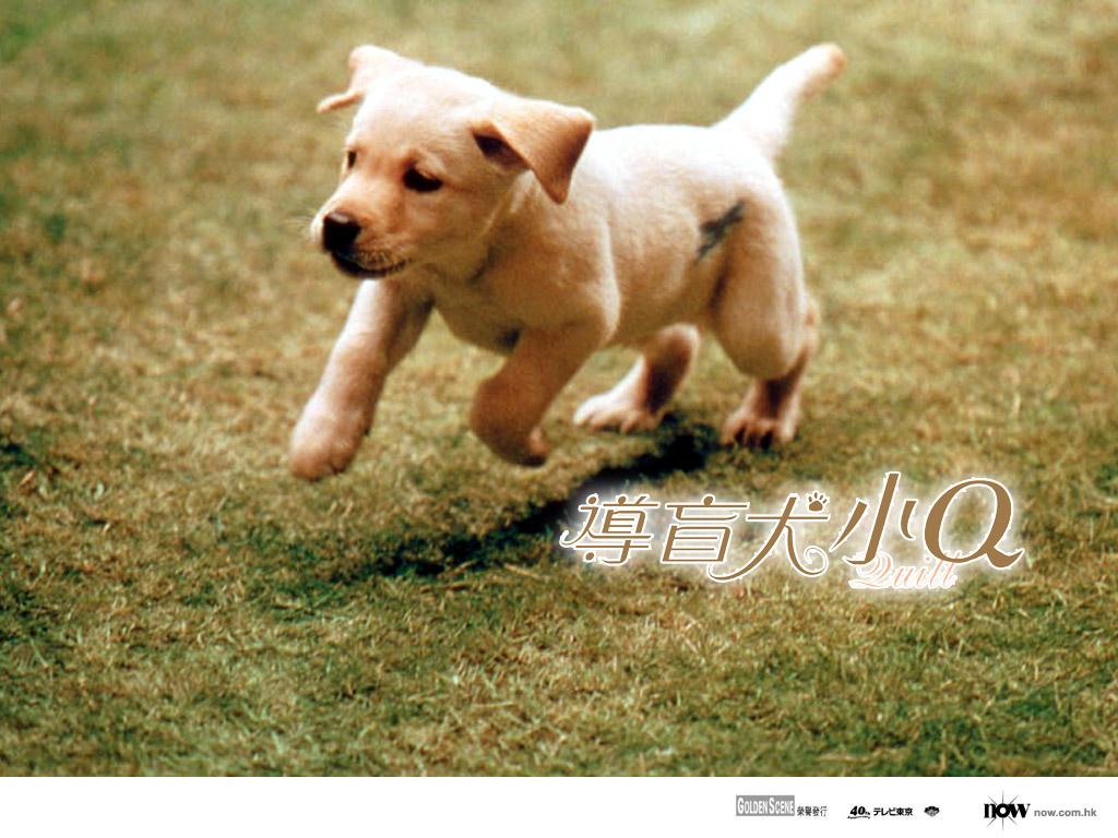 点击该图片下载导盲犬小Q清晰大图