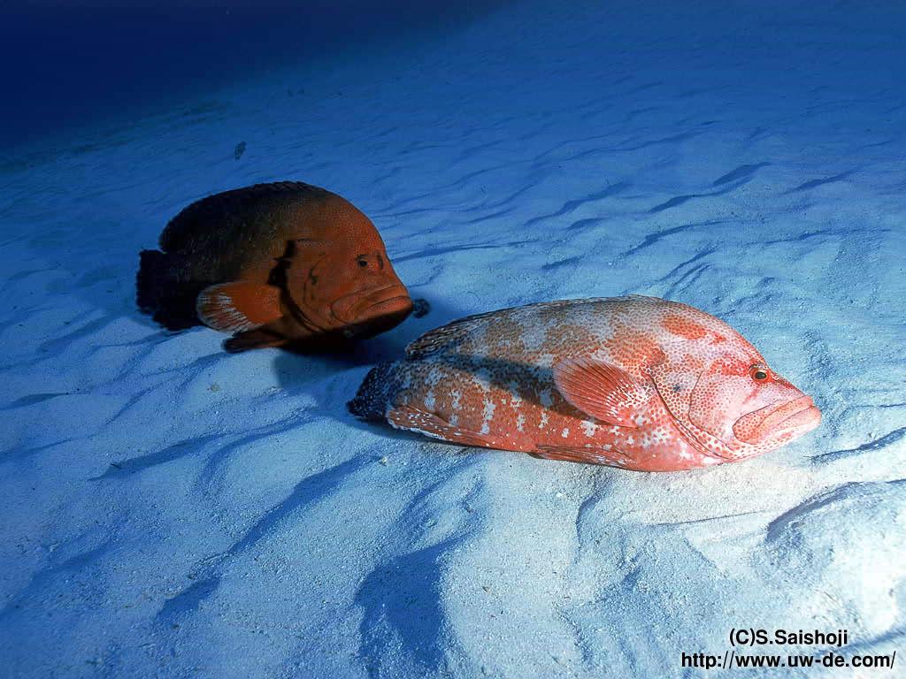 主题 海底世界